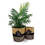 Hidebloom - Pflanzkorb - 2er Set - 16x16 cm - Schwarz / Braun - Aufbewahrungskorb geflochten klein - Übertopf Korb - Blumentopf / Pflanzentopf - Übertöpfe für Zimmerpflanzen - Blumenkorb
