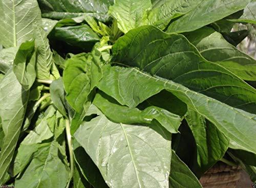 Jamaican Callaloo SEEDS, (Essbare Amaranth) Realer Jamaican Bio Heirloom