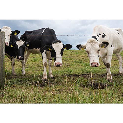 YongFoto 7x5ft polyester fotografie achtergrond nieuwsgierige koeien prikkeldraad hek groen gras Farmland natuur achtergrond voor baby kinderen volwassen portret schieten bruiloft foto's video studio rekwisieten behang