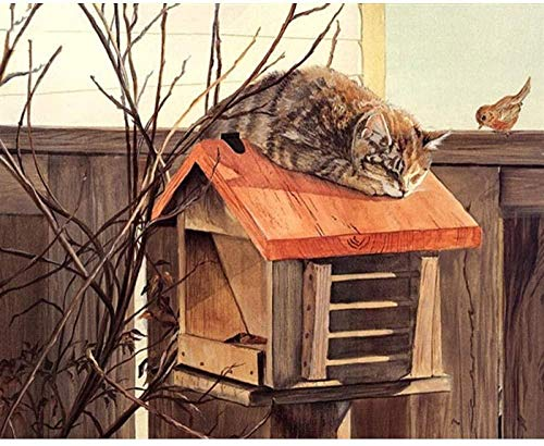 Schilderen op nummer, doe-het-zelf olieverfschilderij voor kinderen, volwassenen, beginners 40 x 50 cm, met ingelijste kat in brievenbus