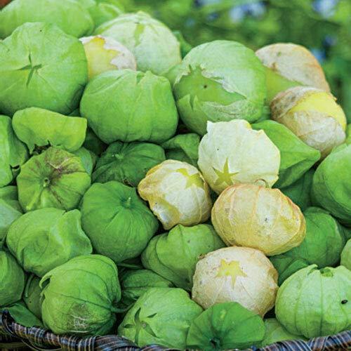 FERRY HOCH KEIMUNG Seeds Nicht NUR Pflanzen: Tomatillo Rio Verde, 25, Nicht-GVO-Saatgut, sehr gesund