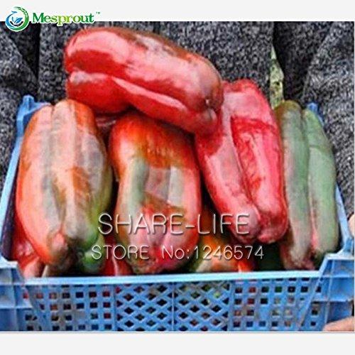 100 graines / paquet géant Poivron Seeds, Facile croissance Paprika Chili Graines de bricolage jardin de légumes plantes