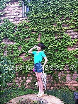 VISTARIC 23: Double Dahlia Seed Mini Mary Fleurs Graines Bonsai Plante en pot bricolage jardin odorant Fleur, croissance naturelle de haute qualité 50 Pcs 23
