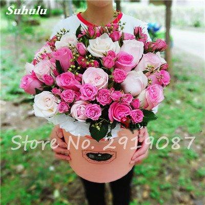 200 Pcs rares couleurs mélangées Graines Rose Rainbow Rose Belles fleurs grimpantes Bonsai graines de plantes pour jardin Décor bateau libre 11