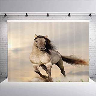 Animal Decor Collection Photography Background Cloth Wild Young Stallion Horse Running at Sunset Male Power Nake Muscular Physique Nobility Photo for Photography,Video and Televison 5ftx4ft