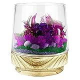 """CYS EXCEL Glass Terrarium Container Pot (H:7"""" W:6"""")   Multiple Size Choices Planter Cups with Wood Base   Plant Terrarium Bowl Vase"""