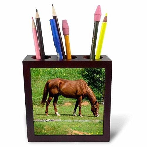 3dRose PH 218809_ 1Zuni Medizin Bär ist EIN Bild, die ich Erstellt, die Heilung Tile Stifthalter, 12,7cm