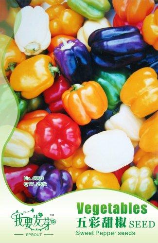 Graines de légumes colorés graines de poivron 25pcs chili lanterne poivre / sac d'emballage d'origine semences jardin Bonsai