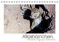 Atlashoernchen. Possierliche Nager auf Fuerteventura (Tischkalender 2022 DIN A5 quer): Atlashoernchen - zutraulich und mit viel Charme (Monatskalender, 14 Seiten )
