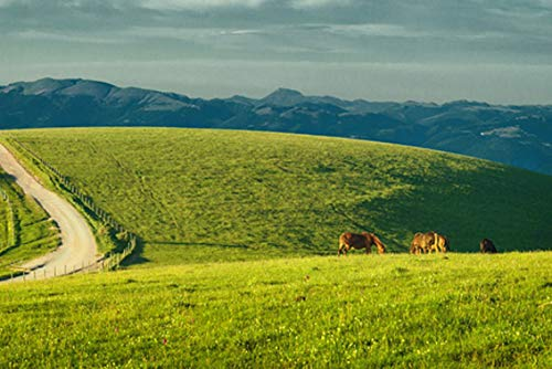 Wall Art Print on Canvas(32x21 inches)- Umbria Italy Monte Subasio Horses Pastures