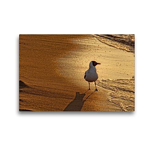 Premium lienzo de tela 45 x 30 cm formato transversal en el mar del mar Báltico imagen de pared, HD de imagen en bastidor, listo de fieltro de alta calidad, impresión en lienzo de Kathleen Bergmann