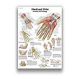 Póster Artístico del Sistema De Músculos De La Anatomía Humana, Impresión del Mapa del Cuerpo, Cuadros En Lienzo De Pared para Ciencia, Medicina, Póster E Impresión Sin Marco S2189 40X60Cm