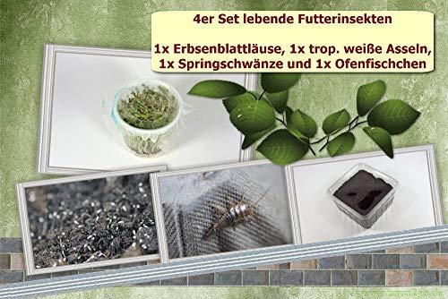 terra2go 4er Set Futtertiere - Erbsenblattläuse, weiße Asseln, Springschwänze, Ofenfischchen