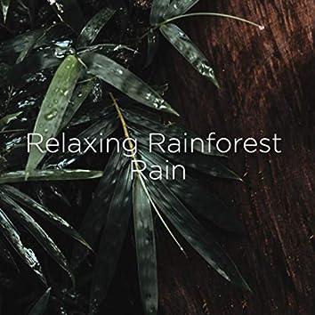Relaxing Rainforest Rain