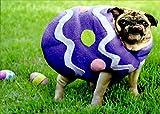 Pug Easter Egg Funny Dog Easter Card