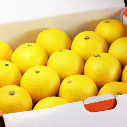 「贈答小夏5.5」愛媛ニューサマーオレンジ(小夏)贈答用5.5kg フルーツ 果物 通販