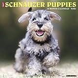 Just Schnauzer Puppies 2020 Wall Calendar (Dog Breed Calendar)