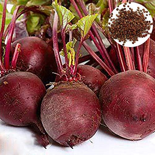 C-LARSS 100 Unids/Bolsa Semillas De Remolacha Tiernas Plantas De Semillero Vegetales Saludables Rojas Nutritivas Sin OMG Para La Granja Semillas de remolacha