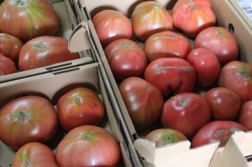 沖縄県産 訳ありトマト約2kg 大きさ不揃い・傷あり