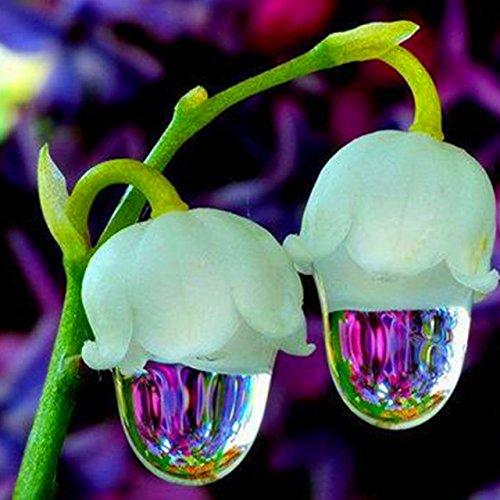 50 pcs/sac Muguet Graines de fleurs rares Indoor de Bell Orchidée arôme riche Bonsai plantes en pot Balcon bricolage jardin rouge