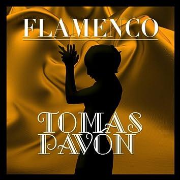 Flamenco: Tomás Pavón