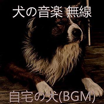 自宅の犬(BGM)