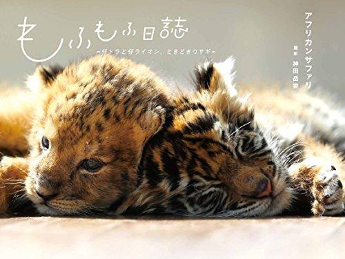 もふもふ日誌 ~仔トラと仔ライオン、ときどきウサギ~』|感想