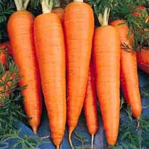 Saint Valery Carrot Seeds (100 Seeds)