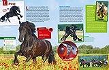 WAS IST WAS Pferde und Ponys: Reiten, Fohlen, Pferdesprache, Turniere, Zucht und Pflegepferd! (WAS IST WAS Edition) - 12