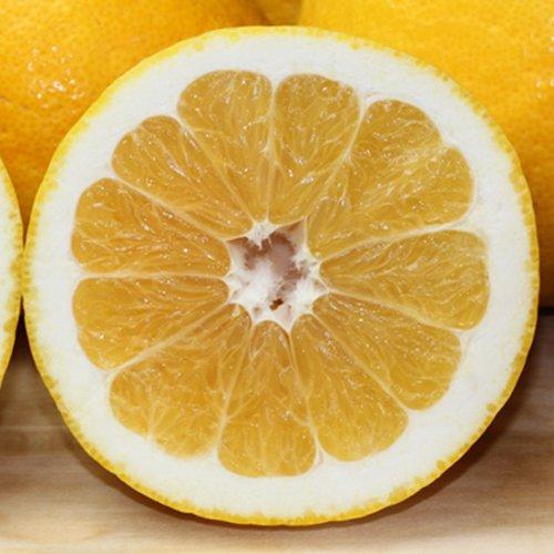 「ファミリー最上ナダオレ5」ファミリー用最上級ナダオレンジ5kg食べ易い冷やして食べるとひんやりジューシー(河内晩柑,かわ フルーツ 果物 通販