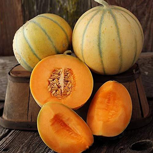 Charentais Melon Seed - 1 g Packet ~30 Seeds - Non-GMO,...