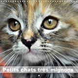 Petits chats très mignons (Calendrier mural 2020 300 × 300 mm Square)