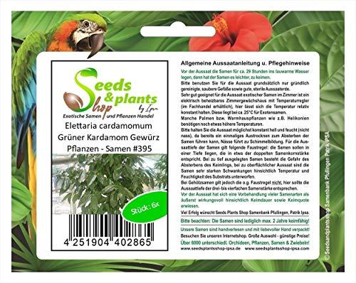 Stk - 6x Elettaria cardamomum Grüner Kardamom Gewürz Pflanzen - Samen #395 - Seeds Plants Shop Samenbank Pfullingen Patrik Ipsa