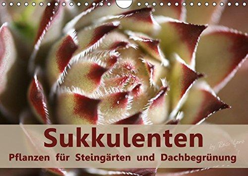 Sukkulenten - Pflanzen für Steingärten und Dachbegrünung (Wandkalender 2017 DIN A4 quer): Sukkulenten auch Dickblattpflanzen genannt speichern in ... (Monatskalender, 14 Seiten ) (CALVENDO Natur)
