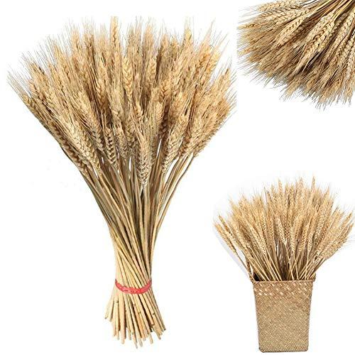 DaoRier - 100 Unidades de Semillas de Trigo secas, Hecho de Trigo Natural, Flores secas, Plantas de jardín, Colores primarios Naturales, espigas de Trigo Secos, decoración de Boda