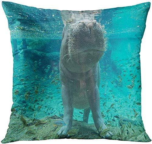NA Blue Busch Hippopotamus in Tampa Florida Green Garden Aquarium Decorative Pillow Case Home Decor Square 18x18 Inches Throw Pillow Cover Pillowcase