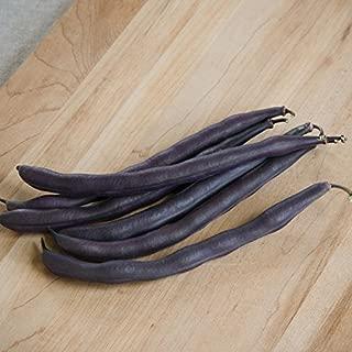 David's Garden Seeds Bean Bush Royal Burgundy SL8556 (Purple) 100 Non-GMO, Heirloom Seeds