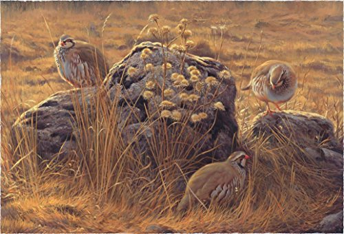 Perdices y cardos - Lámina sobre lienzo. Cuadro de Perdiz roja (Alectoris rufa) 40 x 28 cms. Cuadros de animales, aves, pájaros