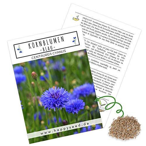 Kornblumen Samen (Centaurea cyanus) - Wunderschön leuchtende Blumen mit langer Blütezeit für eine bunte Blumenwiese (Blau, 1000 Korn, 80 cm)