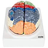 Labeled Brain Models