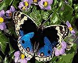 JASIOHCDSPintura DIY por Kits de números Pintura acrílica por número para decoración del hogar Arte de la Pared Mariposa -1216 Pulgadas (Sin Marco) Pintura al óleo Pintada a Mano