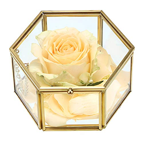 Hipiwe Preserved Flower Glass Box, Hexagon Glass Jewelry Decorative Box, Ornate Trinket Display Organizer Case Keepsake Box Gift for Women and Girls