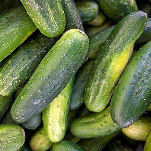 Samen für ca. 20 Pflanzen Gurke Delikatess - Einlege- und Salatgurke, ertragreich