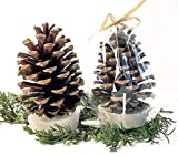 Pine Cone Fire Starter Party Favors (Set of 12)