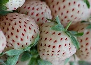 Organic 125 Seeds White Alpine Strawberry Fragaria Vesca Pineberry Fruit Rare Bulk A1201