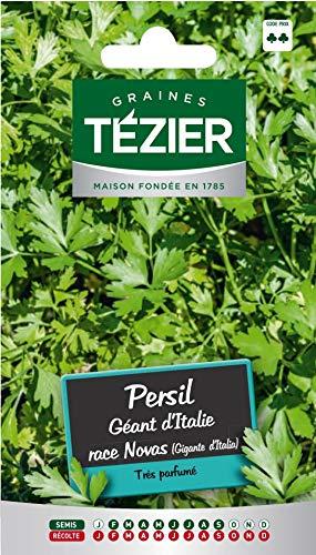 Tezier - Persil Géant d'Italie race Novas