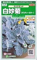 白妙菊(ダスティーミラー)・ダイヤモンド