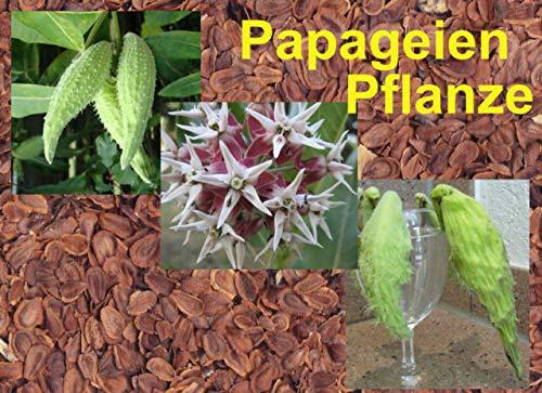 FERRY Bio-Saatgut Nicht nur Pflanzen: Saatgut: papageienpflanze Seeds, Re Milch