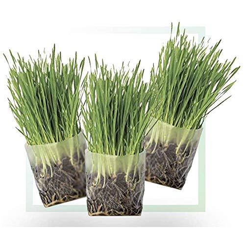 Window Garden Pop Up Cat Grass Kit