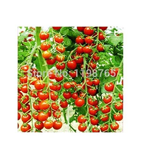 GRAINES 100pcs TOMATE graines de pastèque Tomate beefsteak non-GM Organic Bonsai Alimentation plantes 49%